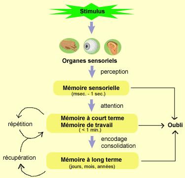L'organisation sensorielle de la mémoire