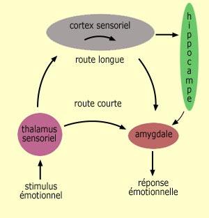 le cerveau 233motionnel le langage corporel